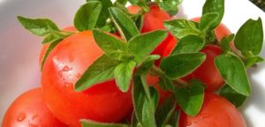 Tomaten und frischer Oregano
